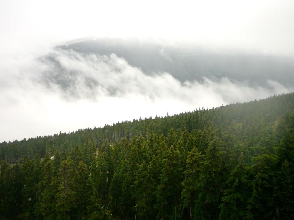 Trees Whistler