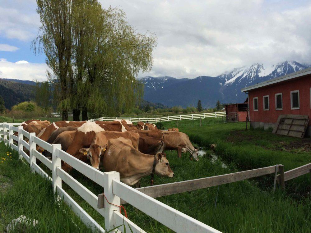 The Farm House Natural Cheese