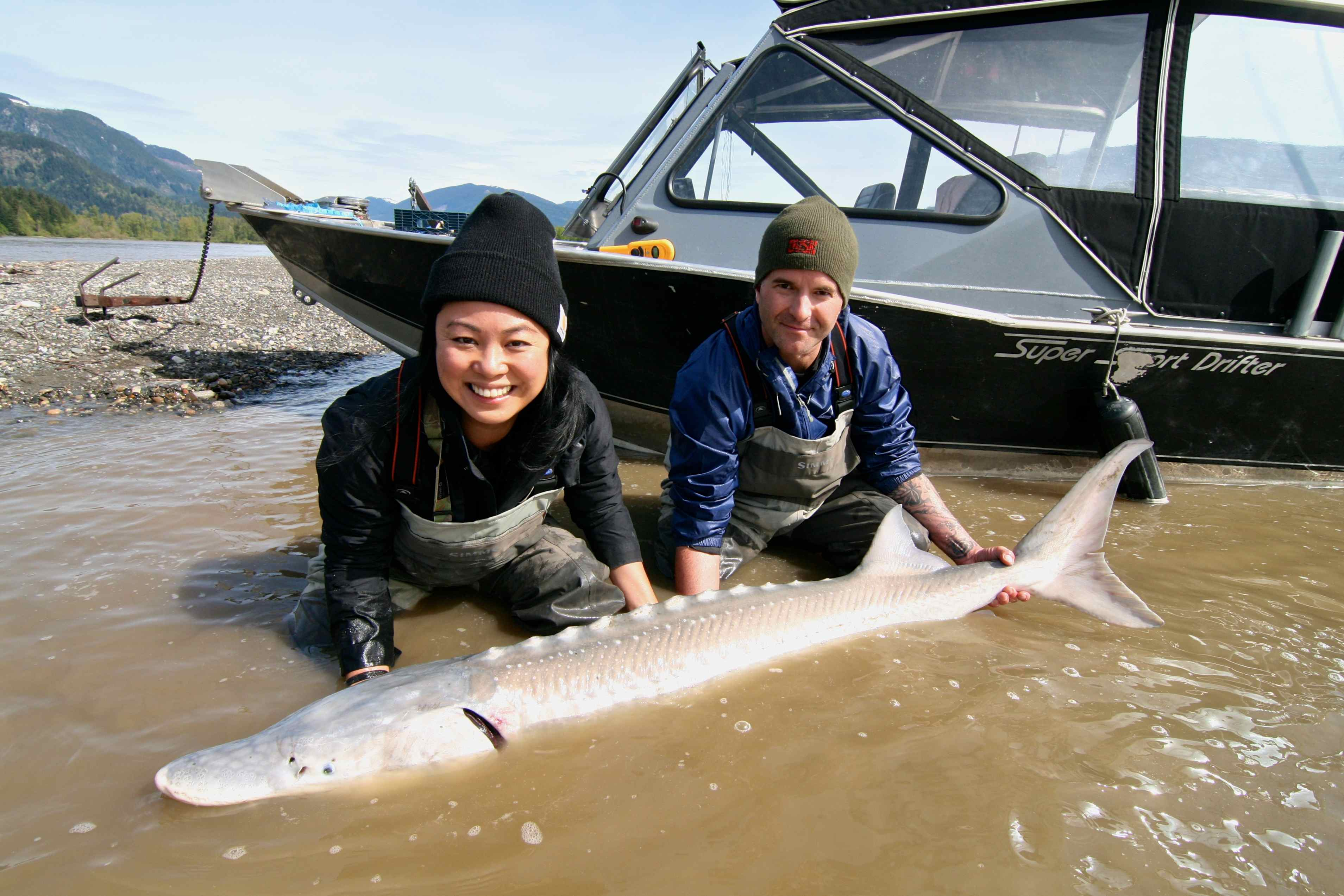 Catching A Sturgeon With BCSFG Harrison Hot Springs