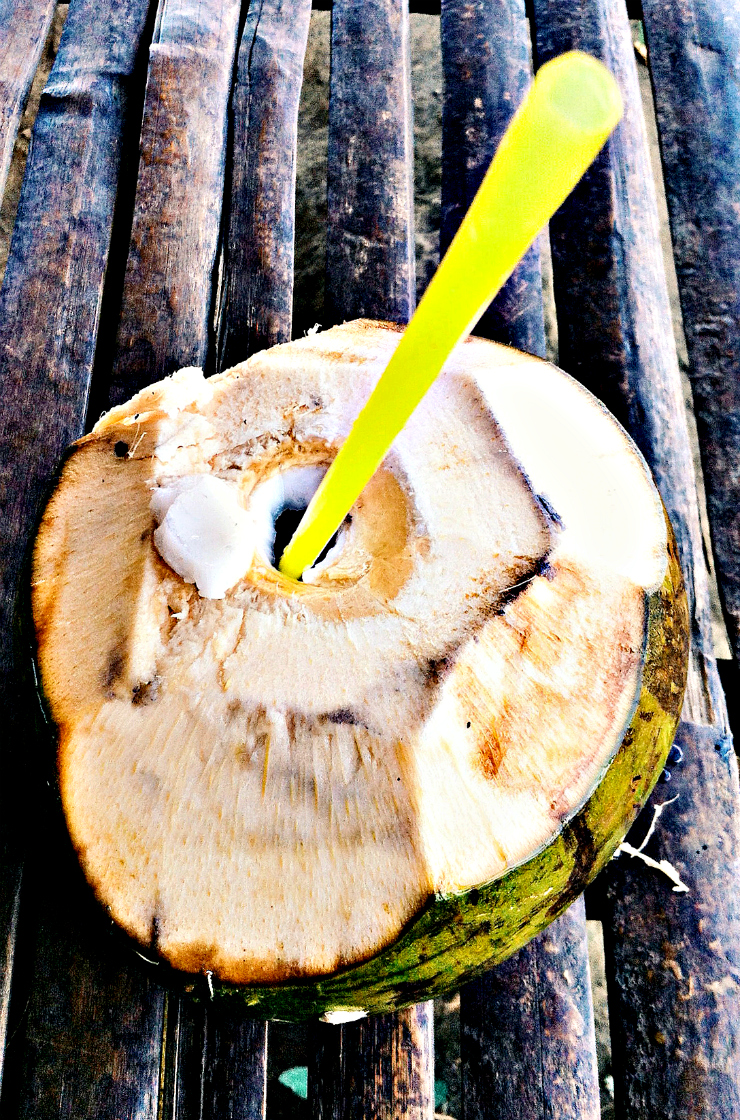 Nuts for coconuts - Mount Taal Philippines