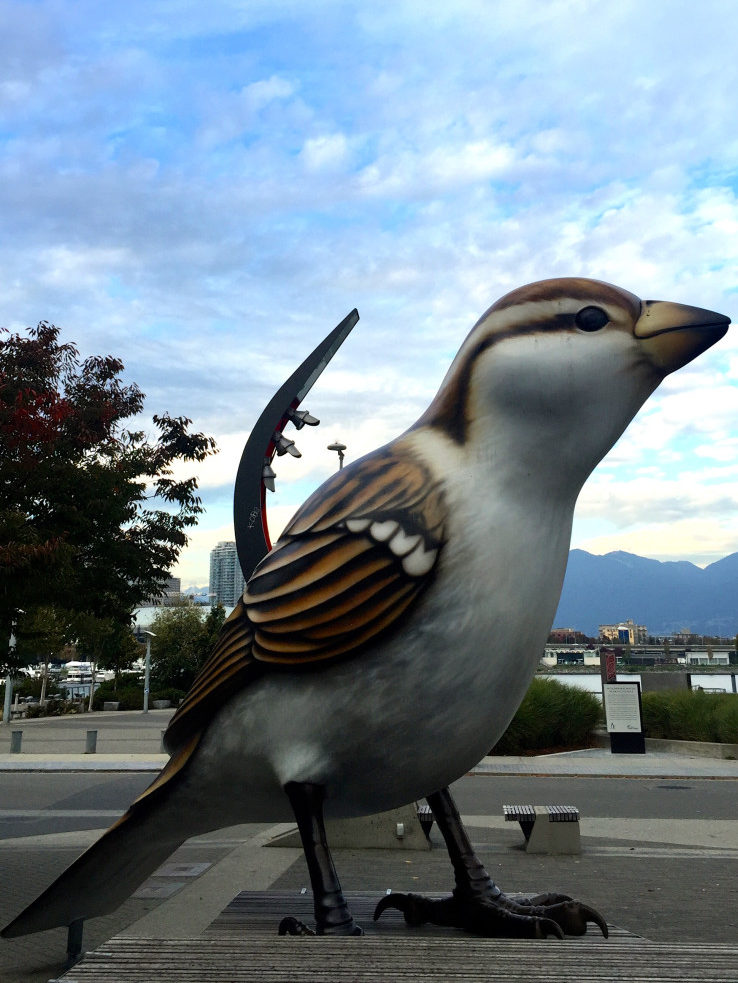 Olympic Village Birds - Best Things To Do On A Budget In Vancouver | www.rtwgirl.com