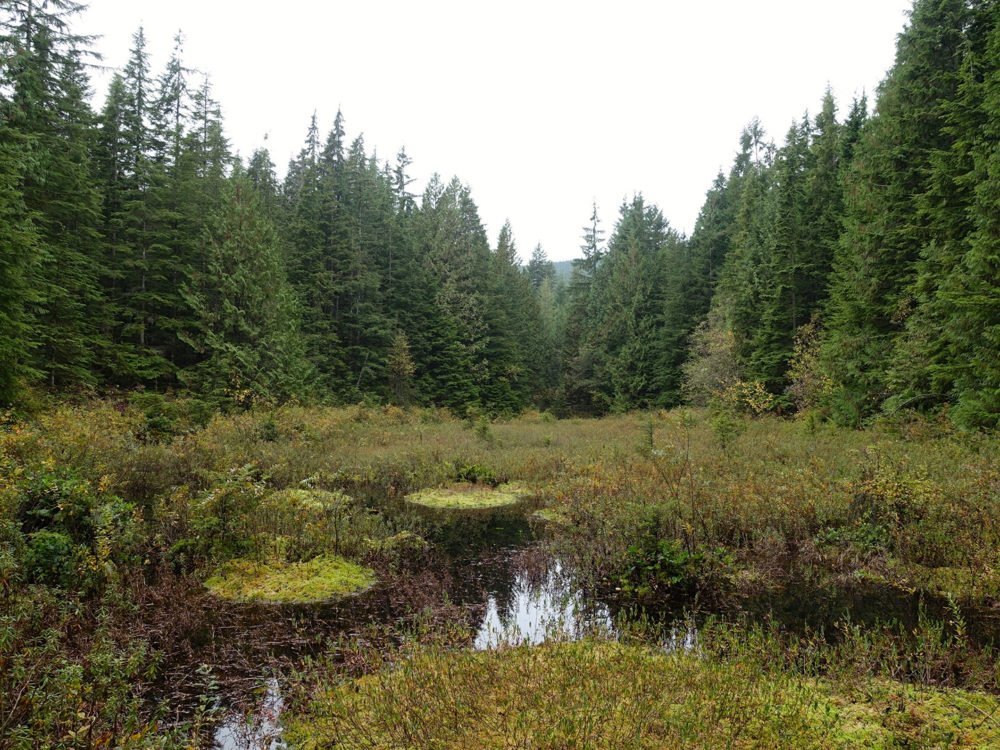 Spirea Bog Golden Ears - Day Trip From Vancouver | www.rtwgirl.com