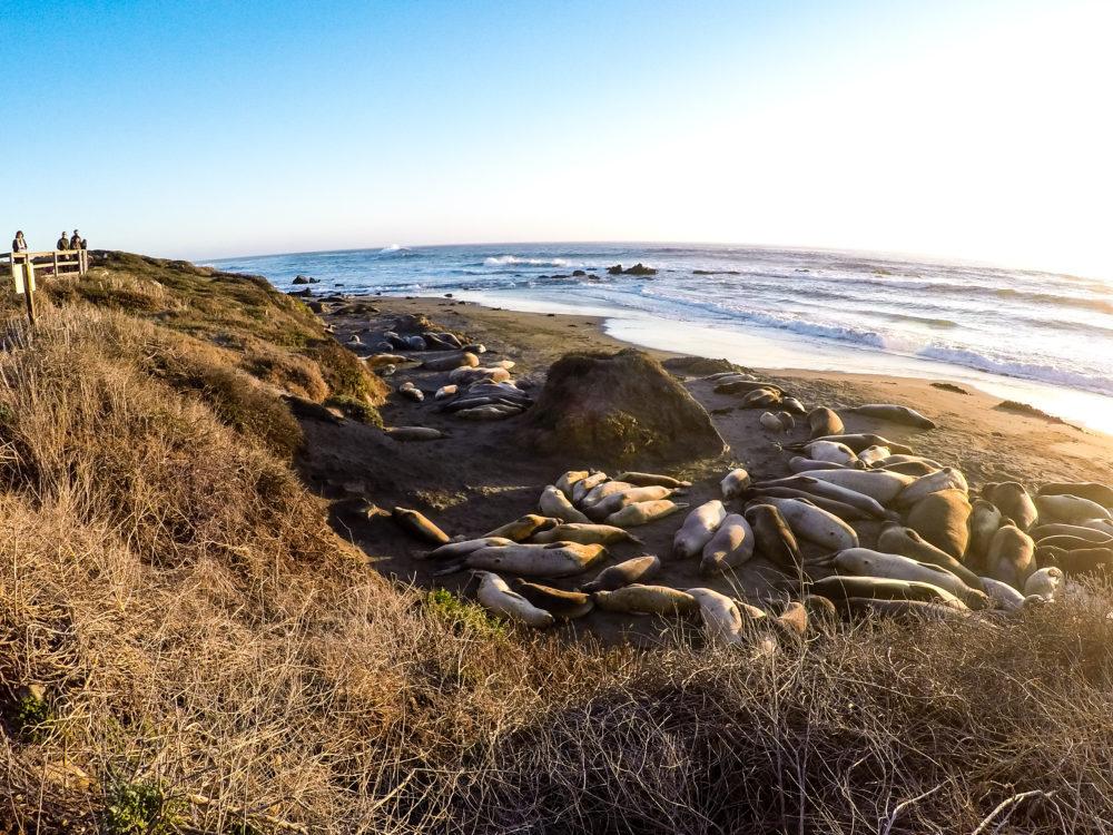 GoPro San Simeon Seals