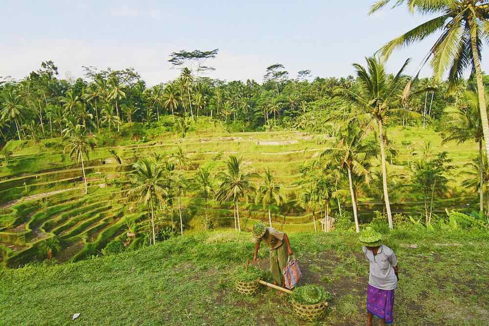 Tegallalang Rice Terraces In Ubud Bali | www.rtwgirl.com